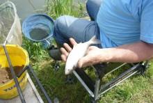 Divieto consumo di pesce nelle aree PFAS